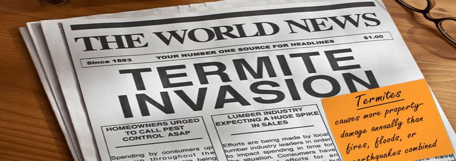 Brisbane termite inspections